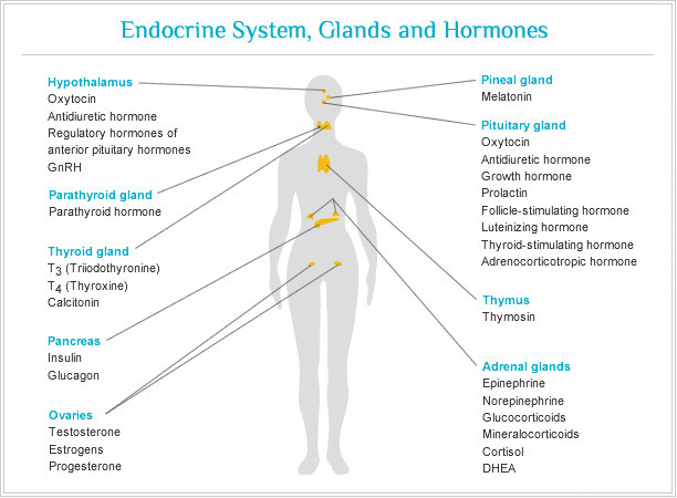 Endocrine System and Yoga