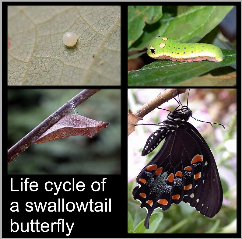 Metamorphisis of a Butterfly and Yoga