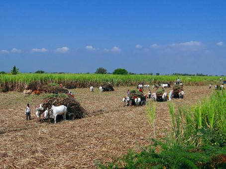 Índia dá pequenos passos em direção à liberdade econômica com novas reformas agrárias