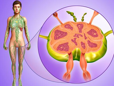 Lymfnoderna