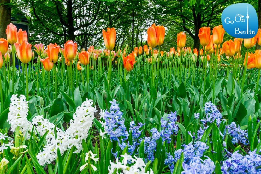 תערוכת פרחים בגן בריץ בברלין