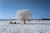 tree in tempelhof.jpg