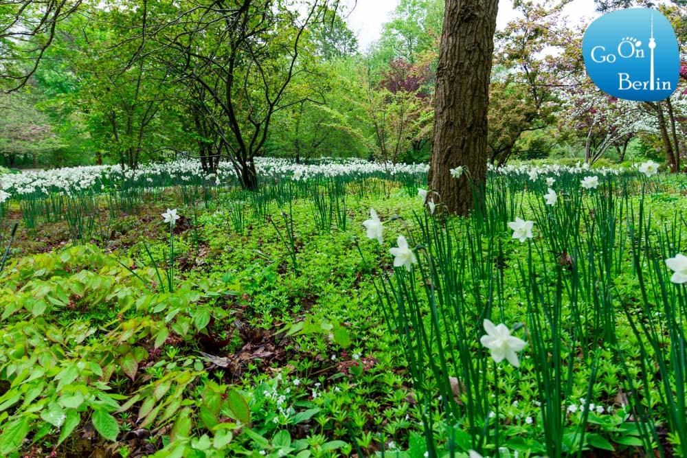 בריצר גארטן - Britzer Garten - פרחים