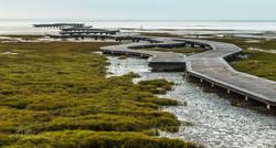 Gaomei Wetlands 3