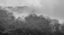 Wulai Mountains 2