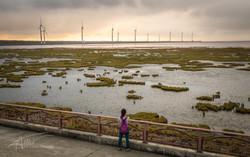 Gaomei Wetlands 5