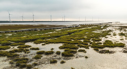 Gaomei Wetlands 4