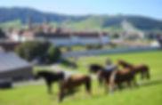 800x520_marstall_pferde_ursi_kaelin.jpg
