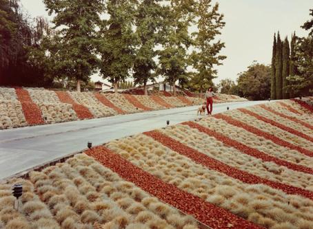 American Identity: Photographer Joel Sternfeld