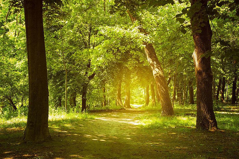 3 Boyutlu Orman Duvar Kağıtları   Orman Yolu Duvar Kağıdı