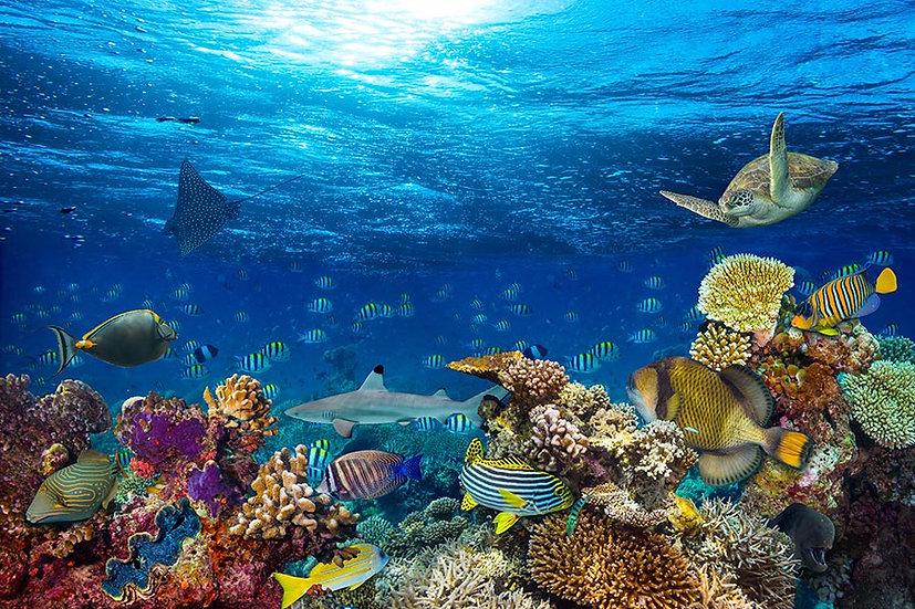 HD Muhteşem Su Altı Duvar Kağıdı 3D | Full Hd Efsane Deniz Altı Duvar Kağıtları