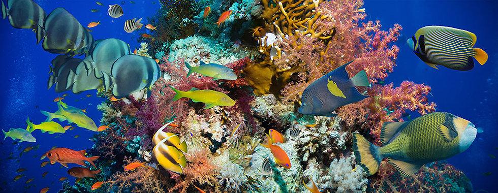 Deniz Balıkları Manzara Duvar Kağıdı   Deniz İçi Balıklar Duvar Kağıdı Kopyası