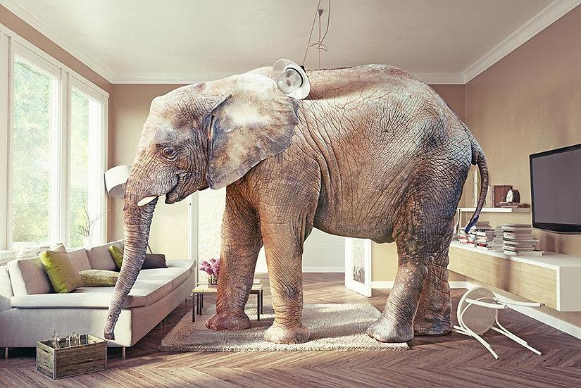 3D Evde Fil Duvar Kağıdı | HD Fil Figürü Duvar Kağıtları | Bremen
