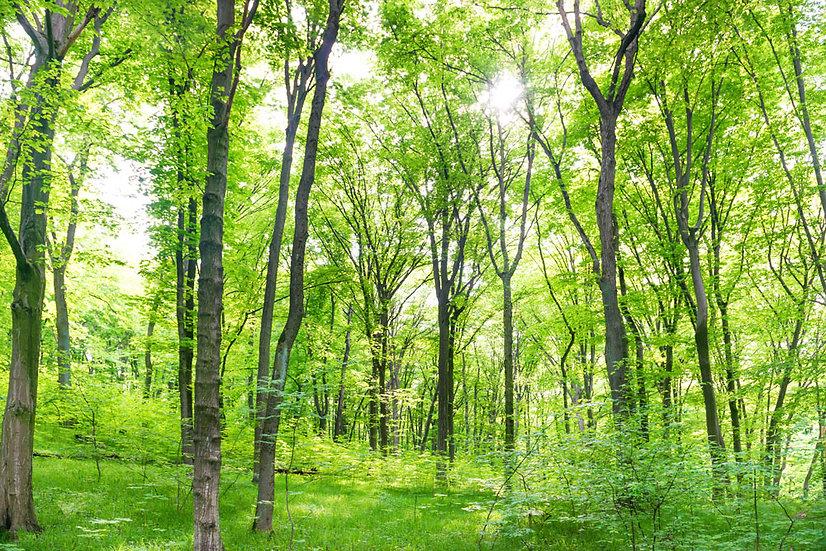 Yeşil Yapraklı Ağaçlar 3D Duvar Kağıdı |3D Yeşil Orman Duvar Kağıtları | Tokat