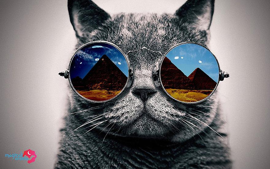 3D Gözlüklü Kedi Duvar Kağıdı | Full HD Veteriner Hekim Odası Duvar Kağıtları