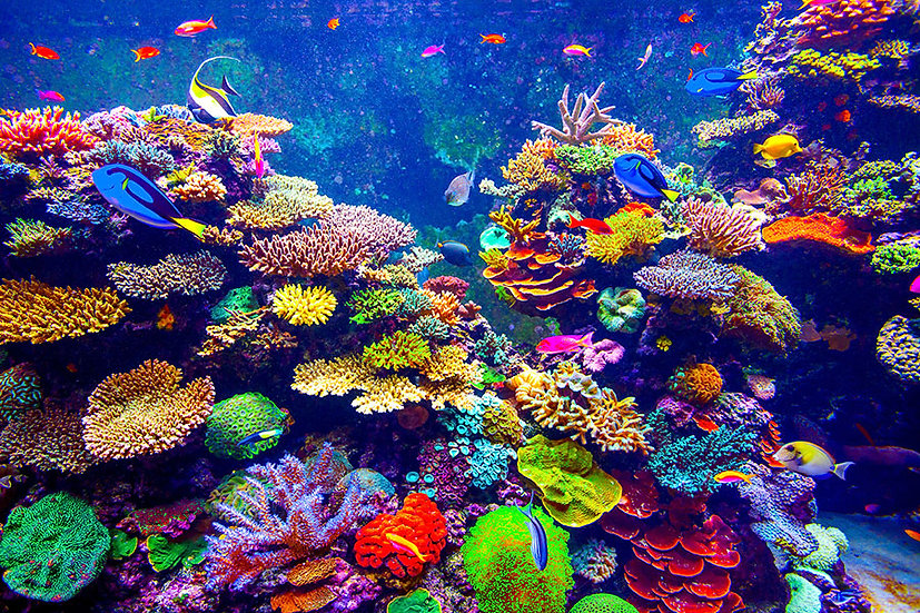 Deniz Tabanı Manzaralı Duvar Kağıdı | Balıklar Duvar Kağıtları