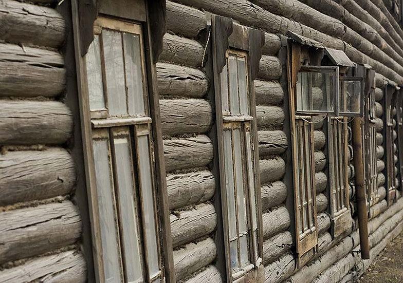 3D Kabuklu Ağaç Duvar Kağıdı | Efsane Ağaç Pencere Duvar Kağıtları