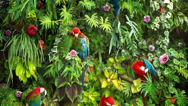 Papağanlar Duvar Kağıdı | Tropikal Orman Duvar Kağıdı | Renkli Papağanlar Duvar