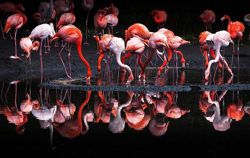 3 Boyutlu Hayvan Duvar Kağıtları | Flamingo Yansıması Duvar Kağıtları
