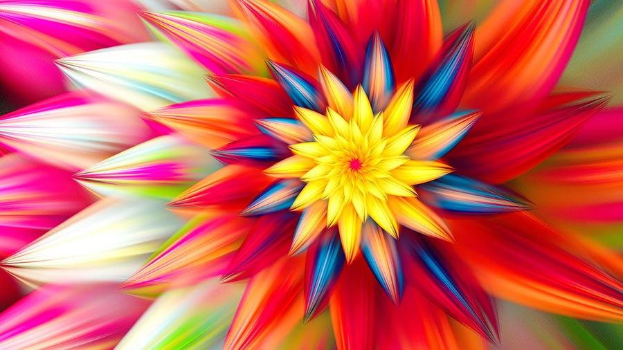 3 Boyutlu Duvar Kağıtları | HD Gazania Çiçek Renkleri Duvar Kağıtları