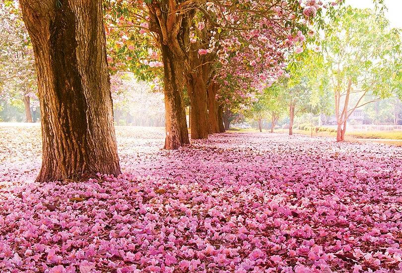 Çiçekleri DökülmüşAğaçlar 3D Duvar Kağıdı | Çiçekli Ağaçlar Duvar Kağıdı