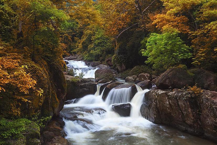 Dağda Derin Orman Duvar Kağıtları | Dokulu Tay Şelalesi Duvar Kağıtları