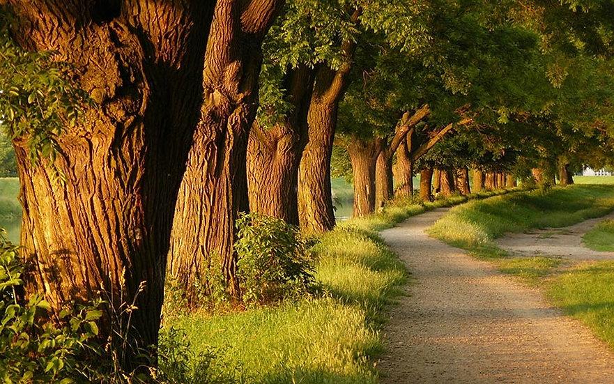 Orman Yolu Duvar Kağıdı Posteri | Hollywood Orman Parkı Duvar Modelleri