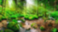 orman-manzara-duvar-kağıdı.jpg