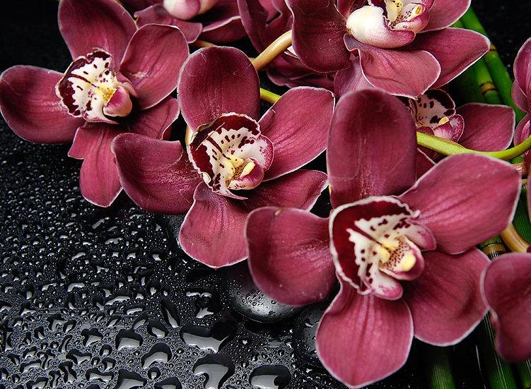 3 Boyutlu Duvar Kağıtları HD| Efsane Güve Orkide Çiçeği Duvar Kağıtları