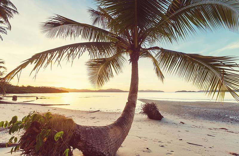 Maldivler Duvar Kağıdı | 3D Maldivler Palmiye Sahili Duvar Kağıdı