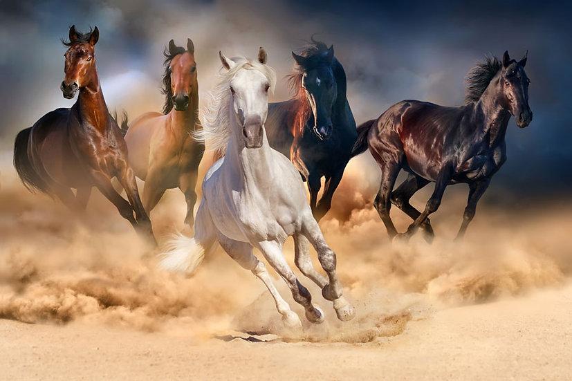 3 Boyutlu Atlar Duvar Kağıtları