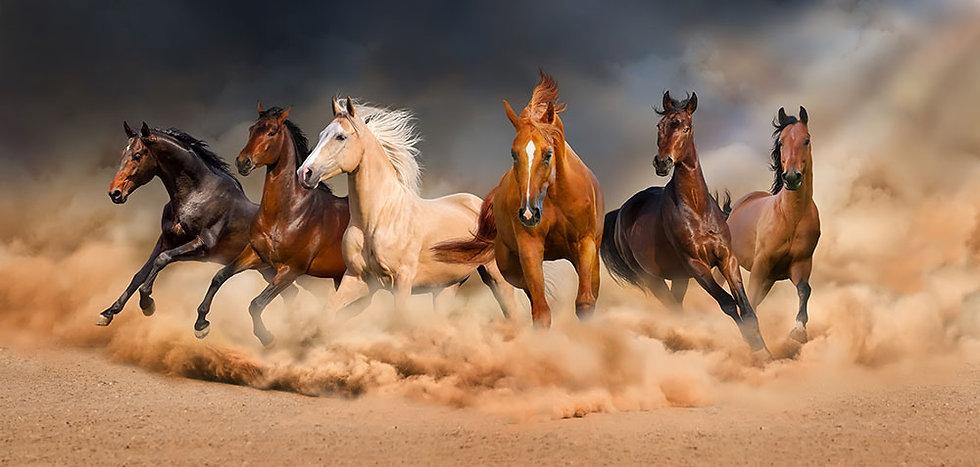 Koşan Güzel Atlar 3D Duvar Kağıtları