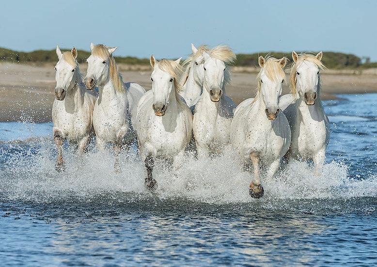 3 Boyutlu Koşan Beyaz Atlar Duvar Kağıtları