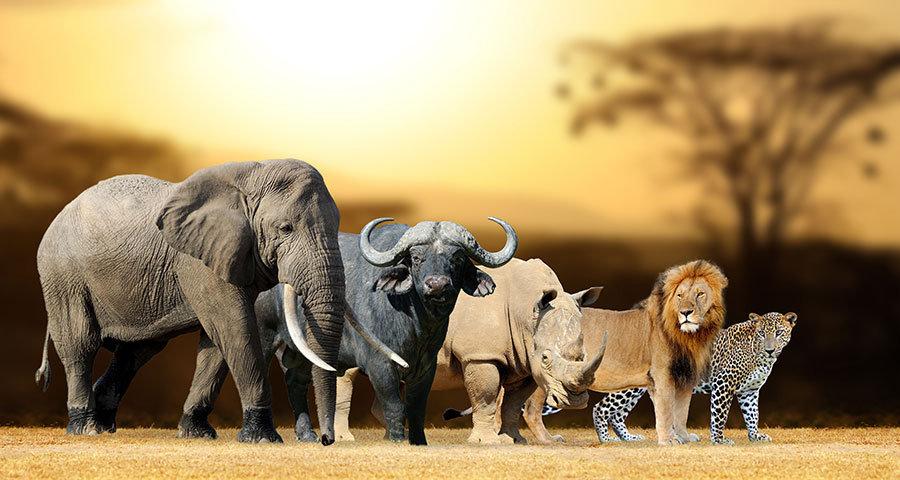 3 Boyutlu Duvar Kağıtları | Vahşi Hayvanlar Topluluğu Duvar Kağıtları