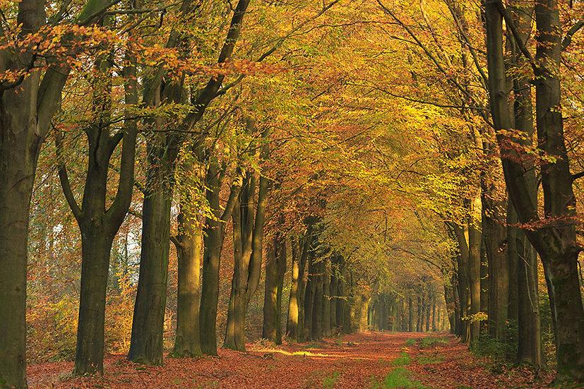 3D Sonbahar Orman Yol Duvar Kağıtları | Ağaç Yaprakları Duvar Kağıtları