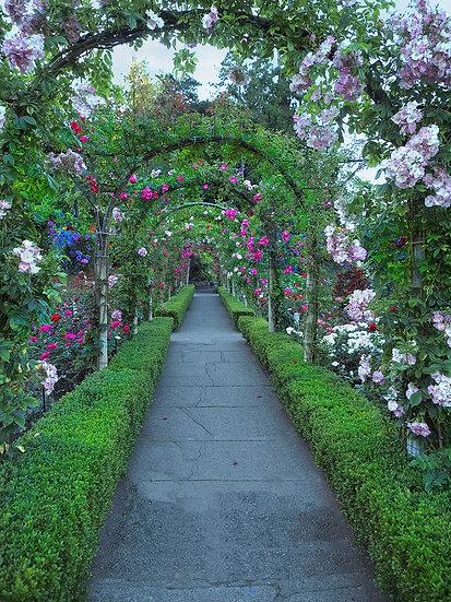 Çiçek Bahçesi 3 Boyutlu Manzaralı Duvar Kağıtları