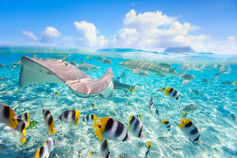3 Boyutlu Sualtı Balık Duvar Kağıtları | Efsane Dev Balık Duvar Kağıtları
