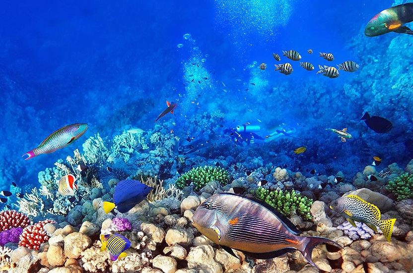Mercan Balık Ailesi Duvar Kağıtları | 3 Boyutlu Oturma Odası Duvar Kağıtları