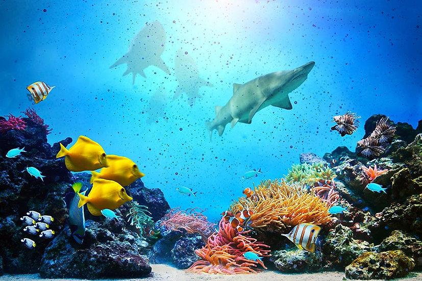 Deniz Altı Köpek Balığı Duvar Kağıtları | Dokulu Sualtı Duvar Kağıtları