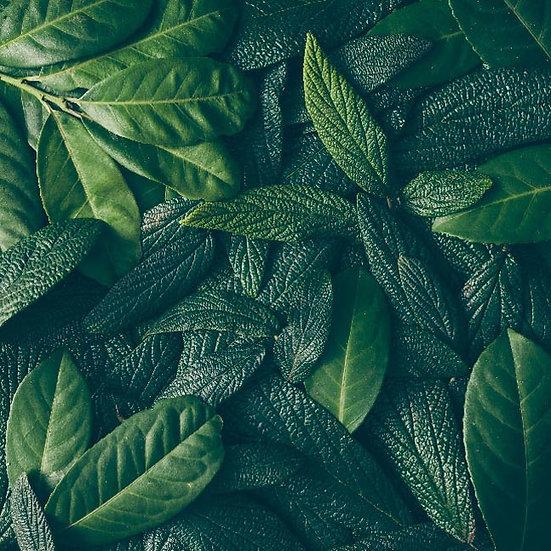 3D Ağaç Yaprakları Duvar Kağıdı   Tropikal Yapraklar Duvar Kağıtları