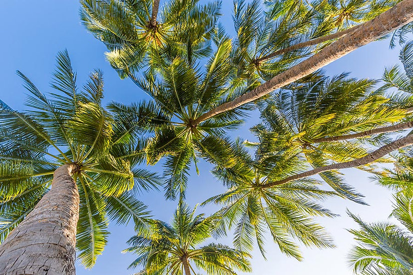 3 Boyutlu Duvar Kağıtları HD | Efsane Palmiye Ağaçları Gökyüzü Duvar Kağıtları
