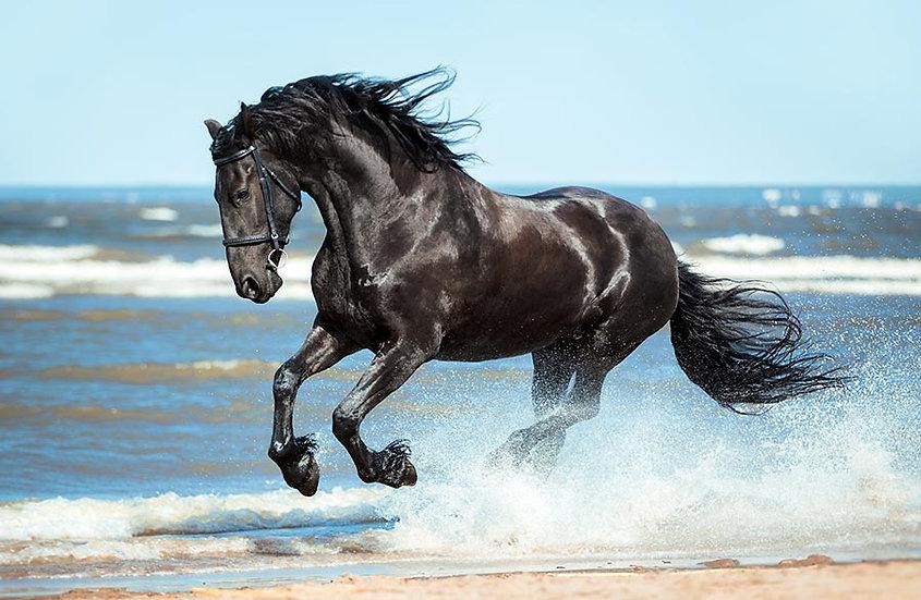3 Boyutlu Arap Atı Sahilde Duvar Kağıdı | Dokulu Mustang Atı Duvar Kağıtları