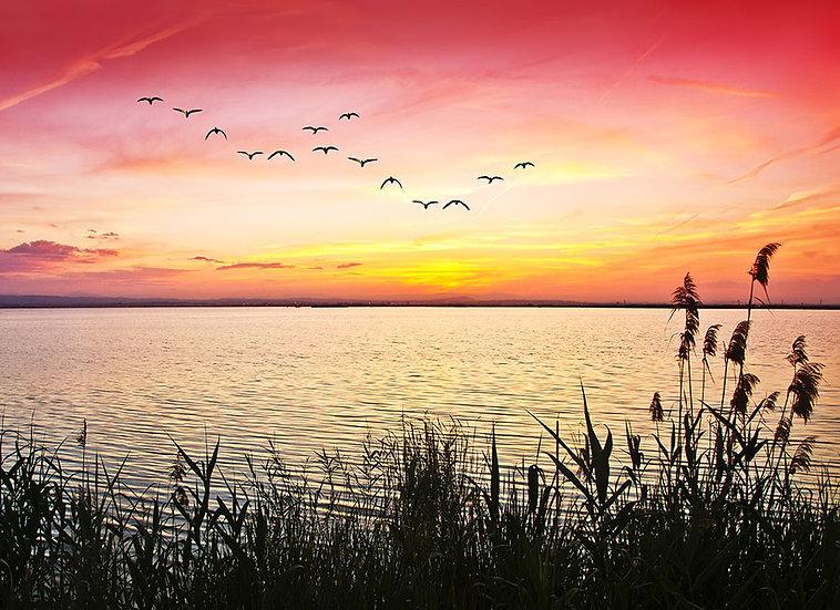 Sazlık Kuşlar Günbatımı Manzaralı Üç Boyutlu Duvar Kağıtları