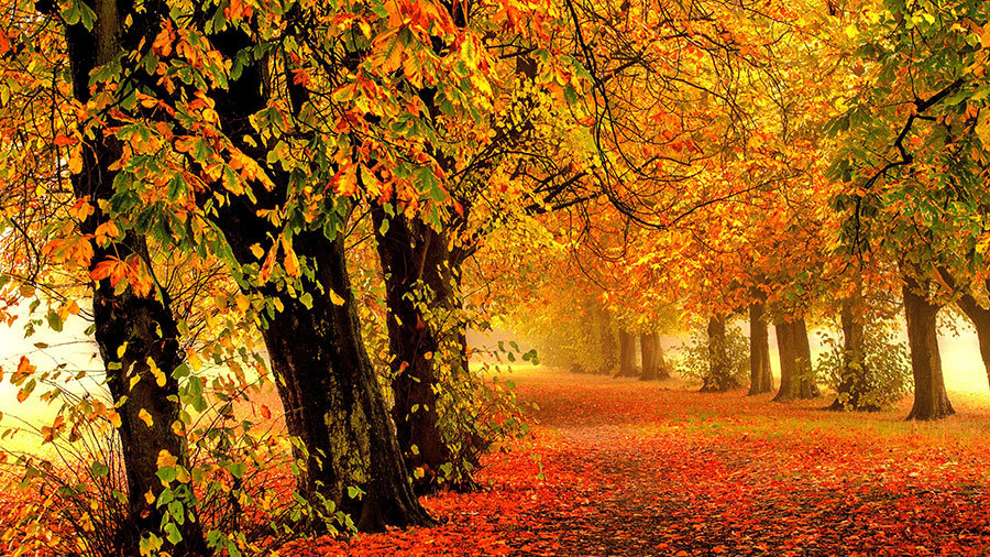 Sonbahar Görseli Duvar Kağıdı Posteri | Yaprak Görseli Duvar Modelleri