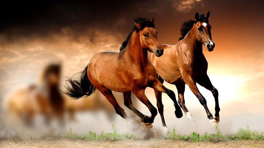 Koşan Atlar Manzaralı Duvar Kağıtları