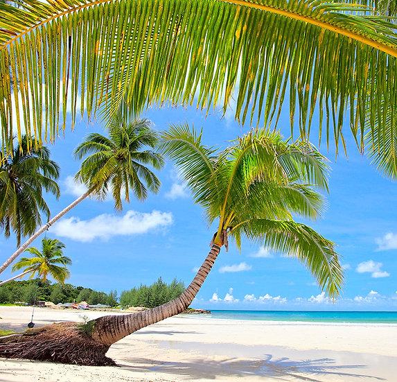 Palmiye Ağaçlı Kumsal Duvar Posterleri | 3D Plaj Duvar Kağıtları