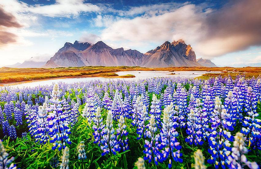 Yüksek Dağlar Manzaralı Sümbül Çiçekleri