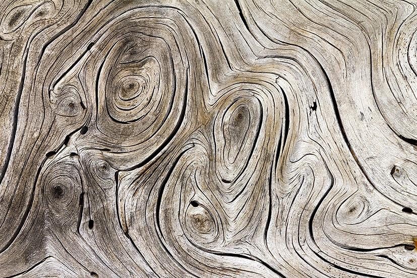3D Kabuklu Ev Ağaç Görseli Duvar Kağıdı | Efsane Ağaç Kütüğü Duvar Kağıtları