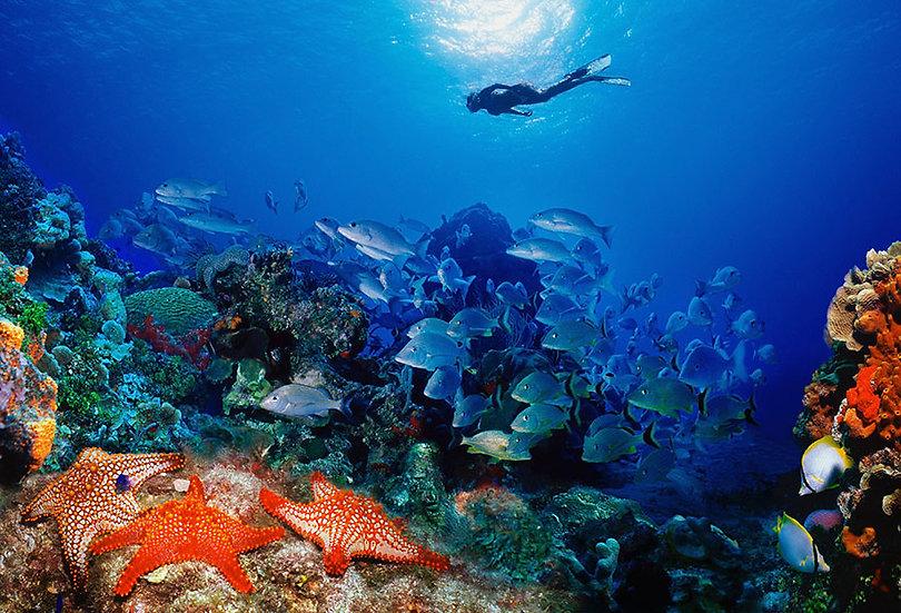 3 Boyutlu Deniz Balıkları Duvar Kağıtları Örnekleri