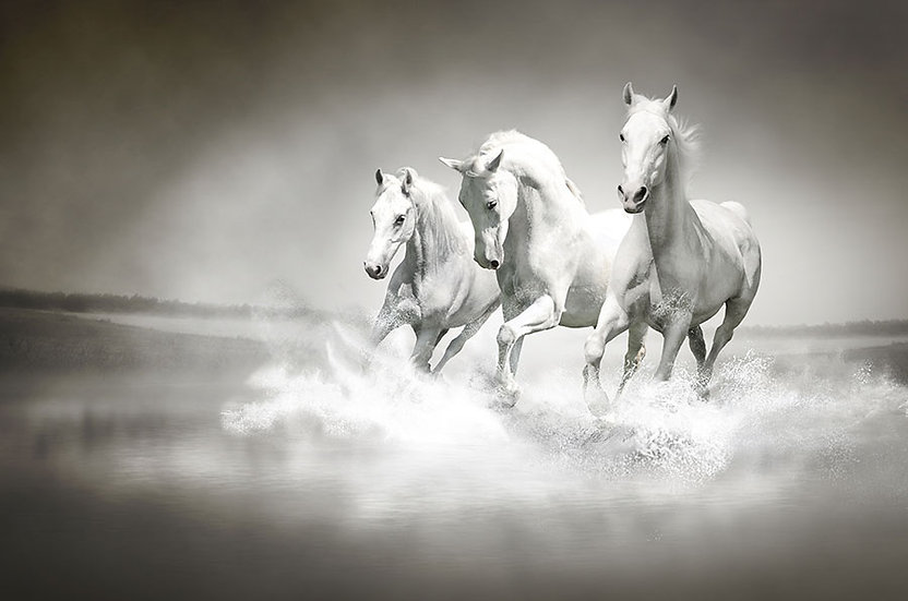 3 Boyutlu Beyaz Atlar Duvar Kağıtları Modelleri
